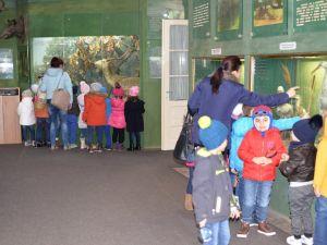 """Vizitatori, la Muzeul Brăilei """"Carol I"""" - Secţia Ştiinţele Naturii. Grup de copii de la Grădiniţa nr. 18"""